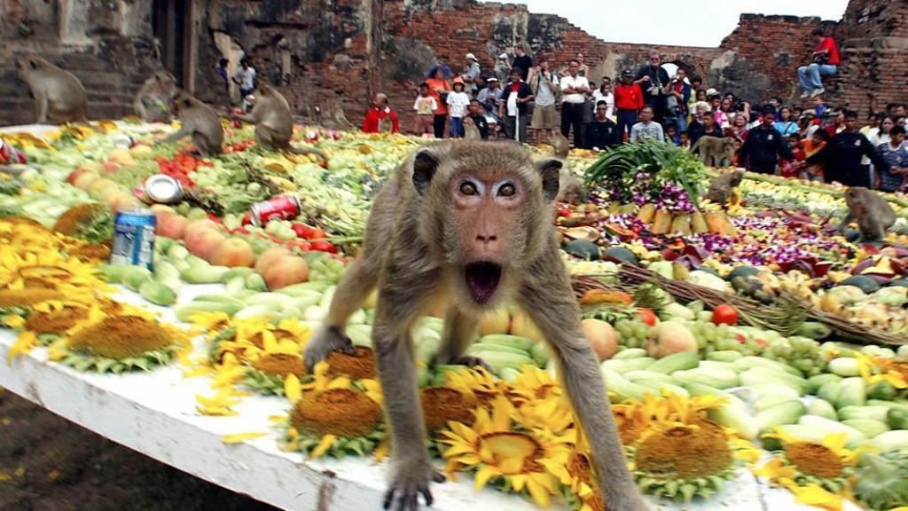 Fest Affen in Thailand