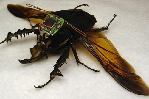 "حشرات داربا للتجسس ""DARPA's Cyber Bug Project"