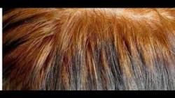 تفسير حلم الحناء على الشعر في المنام