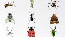 الحشرات في المنام للامام الصادق