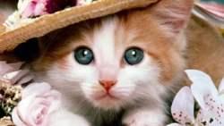 تفسير حلم إنسان يولد قطة في المنام