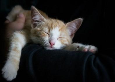 تفسير حلم قتل القطة في المنام