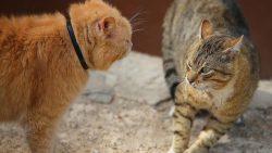 تفسير حلم قطة تقتل قطة في المنام