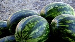تفسير حلم البطيخ الأخضر في المنام