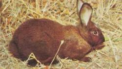 تفسير حلم أرنب يهاجمني في المنام