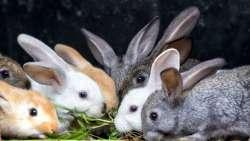 تفسير حلم رؤية الأرانب الكثيرة في المنام