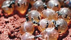 تفسير حلم رؤية بيض النمل في المنام