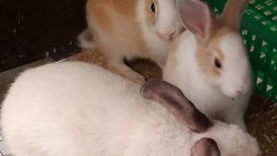 تفسير حلم رؤية شراء الأرانب في المنام