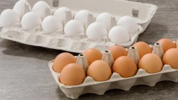 تفسير حلم شراء البيض في المنام