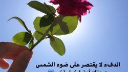 اقتباسات عن الورد