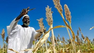 Photo of الزراعة تهدد باتخاذ إجراءات قانونية في مواجهة مزارعين