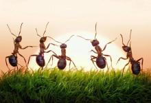 """Photo of العلماء يدرسون إمكانية التخلص من """"كورونا"""" بمساعدة النمل"""