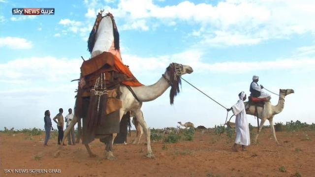 الهودج السودان - غرب كردفان - دارفور - السودان .jpg