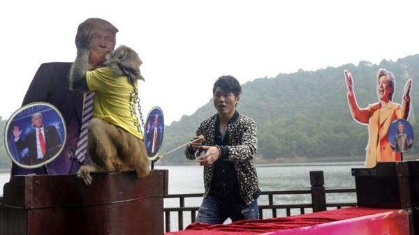 لماذا يُقبل القرد الصيني.. ترامب