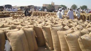 Photo of الوارد وأسعار الذرة بسوق محاصيل القضارف