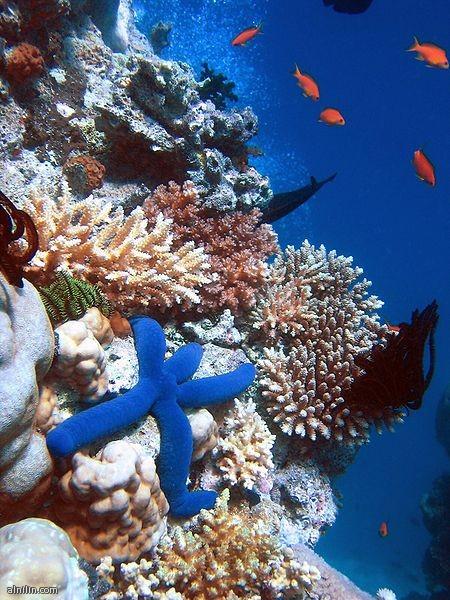 الحاجز المرجاني العظيم - استراليا