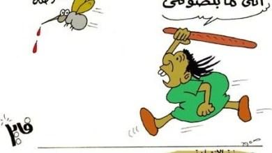 Photo of مشاريع إنتاج البعوض اللاحم والبياض
