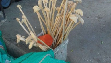 Photo of عروق المحبة تشكل حضوراً سوق ستة… عالم من الدهشة