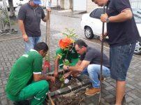 Prefeitura de Anadia inicia serviço de arborização com plantio de mudas em área urbana