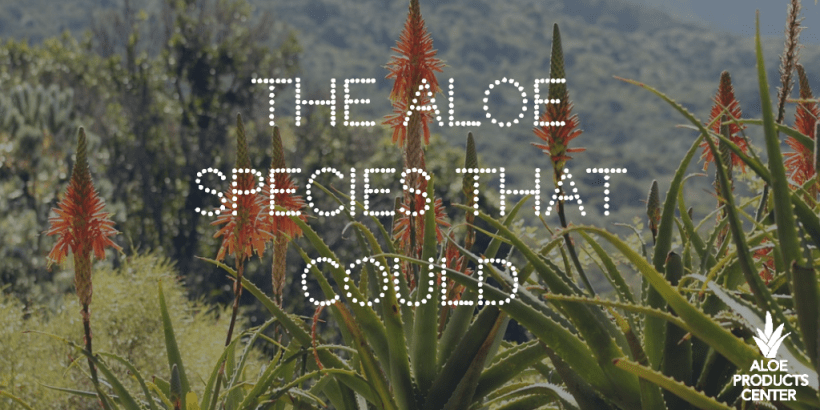 The Powerful Aloe Species You Need to Know About