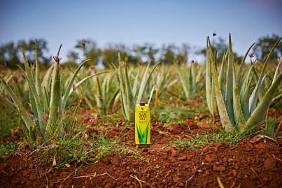 Stabilizzazione dell'Aloe Vera