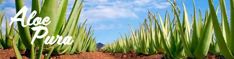 Aloe Vera benefici dell'aloe Forever