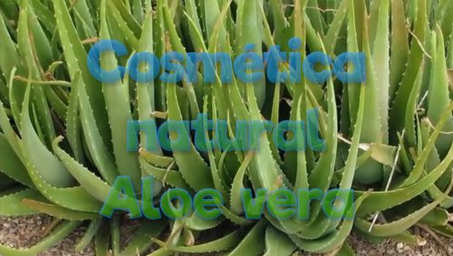 Cosmética natural ecológica con Aloe Vera