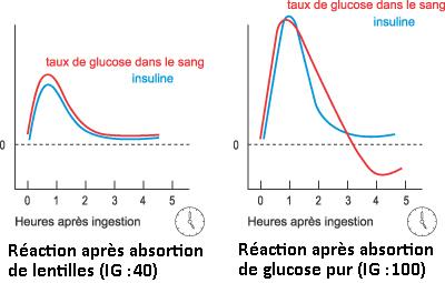 Courbes de glycémie et insulinique les différences selon aliment absorbé