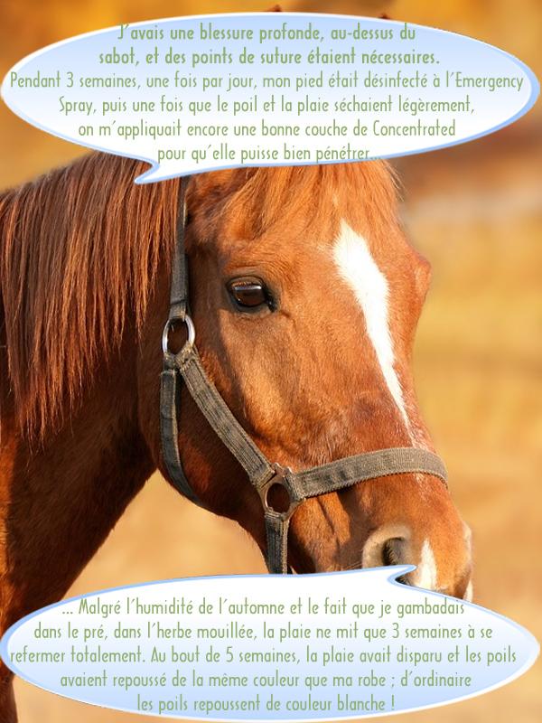 Soin animal Aloe Vera sur cheval suite à blessure au-dessus du sabot !