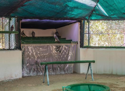 the air-conditioned molting room