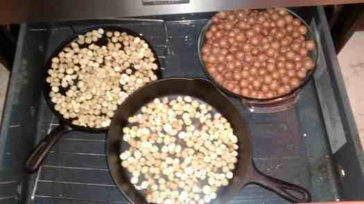 Aloha Farms food forest Macadamia Nuts February 2017 - a small portion of our harvest this year