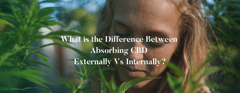 What is the Difference Between Absorbing CBD Externally Vs Internally?