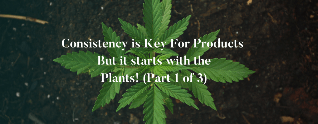 Consistency is Key For Products But it starts with the Plants! (Part 1 of 3)