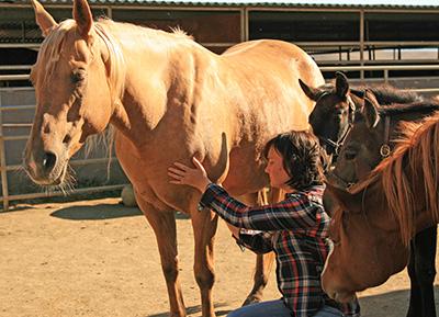 Reiki for Horses