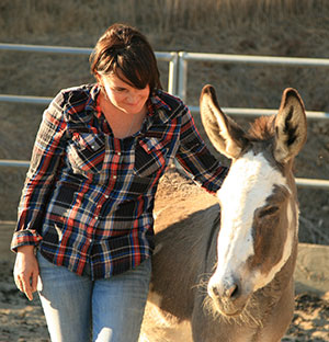 Contact Alo Horses