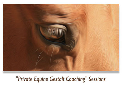 Private Equine Gestalt Coaching