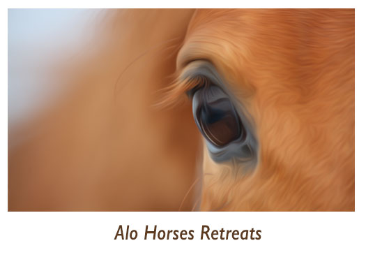 Alo Horses Retreats