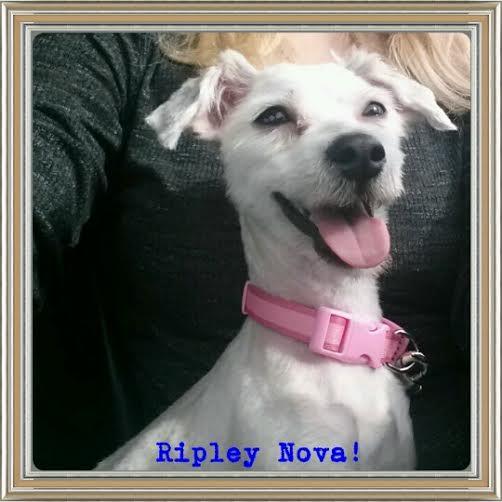 Ripley4