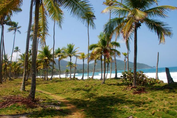 Palmen am Meer bei Capurgana.
