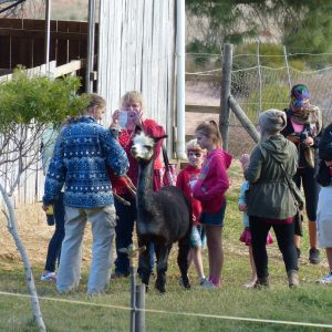 Alpaca Barn Tour