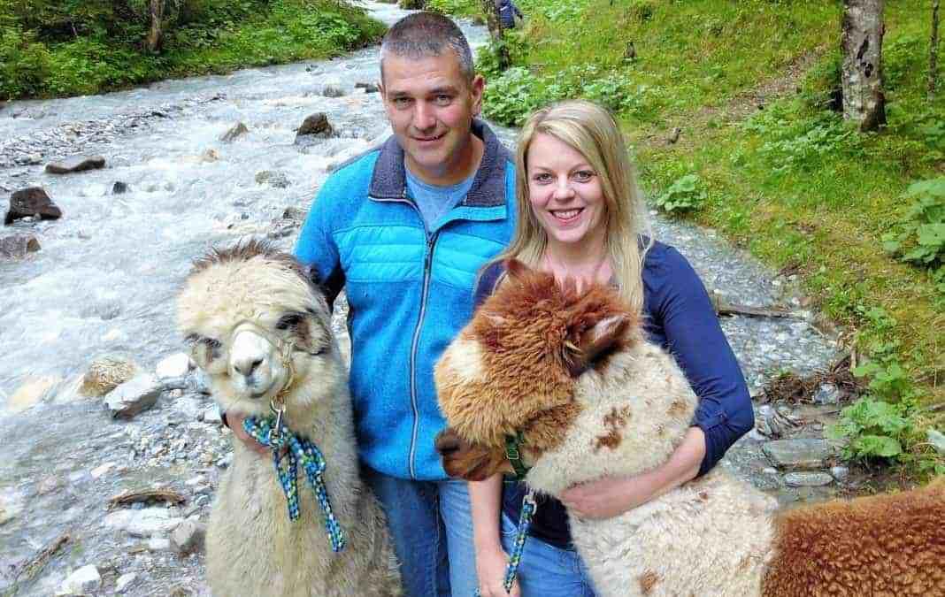 Alpakas passen gut nach Tirol