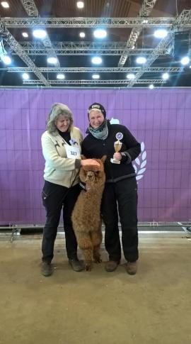Rcolor Champion AVSW Gold Valentino