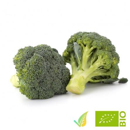 Broccolo Siciliano Biologico