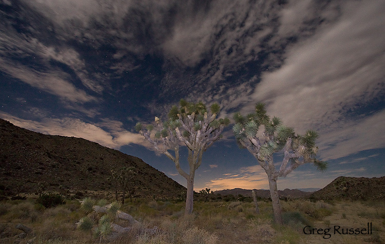 Alpenglow Images Joshua Tree National Park By Greg Russell