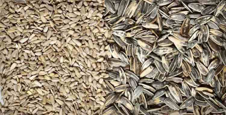 sunflower seeds with and without shell