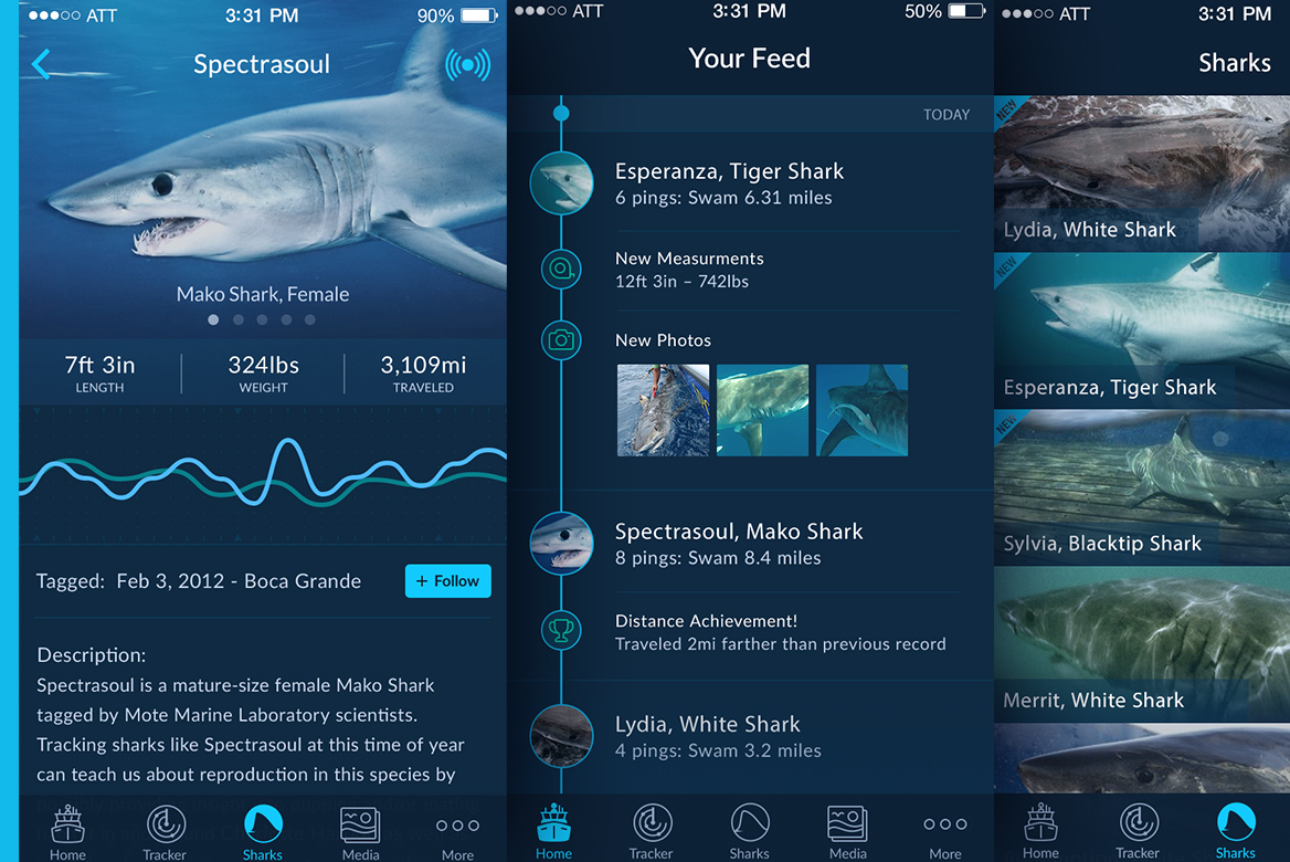 Shark Tracker Redesign