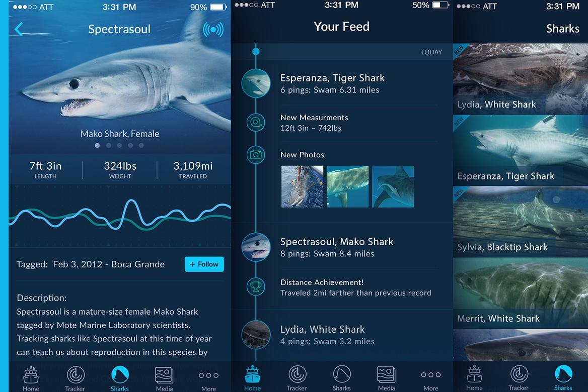 Shark Tracker Redesign