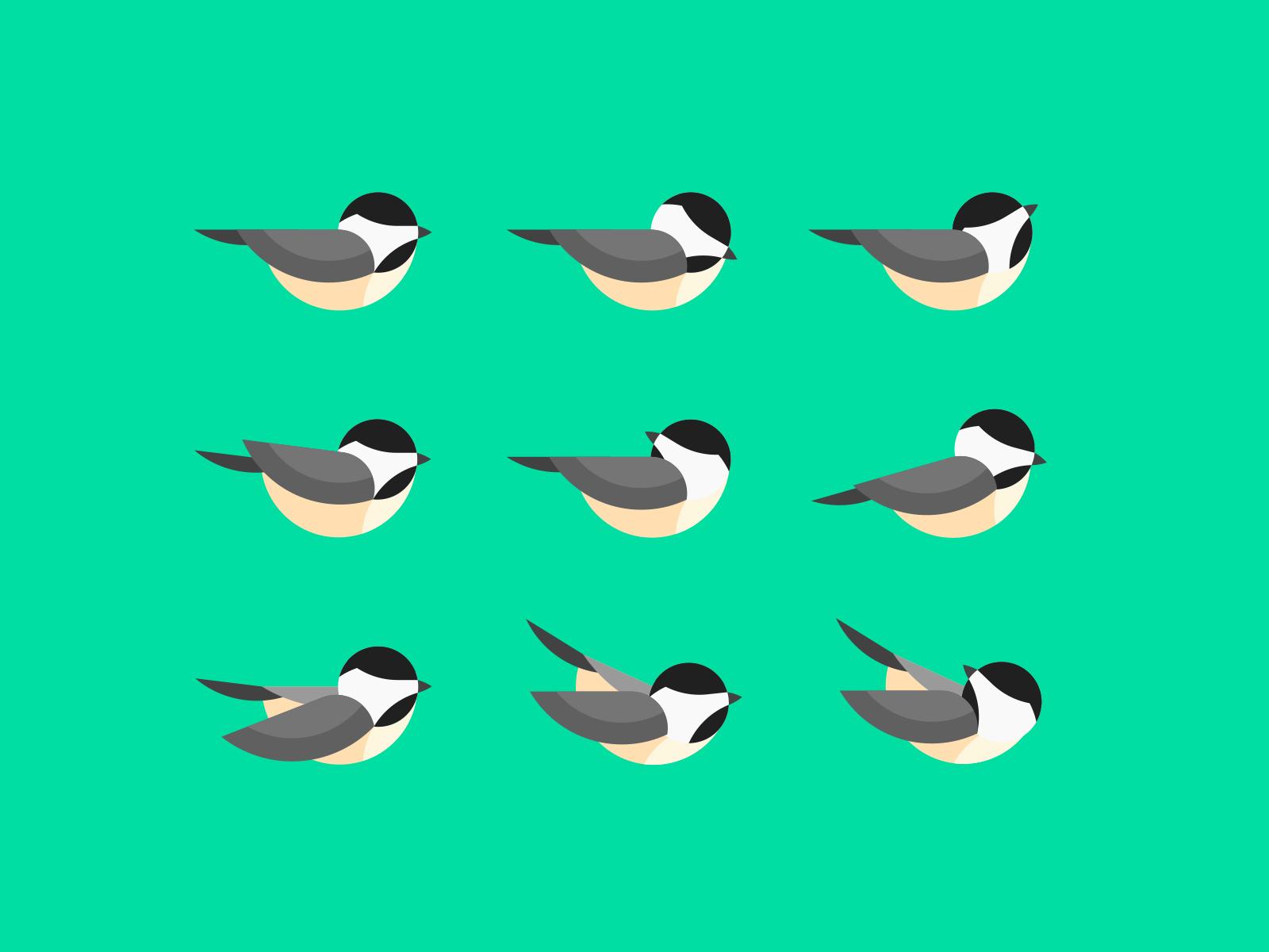 chickadee-study
