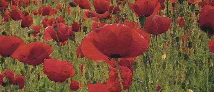 British Legion calls for Twitter silence on Poppy Day
