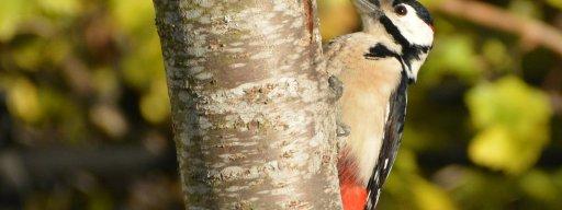 woodpecker_sports_injury_helmet